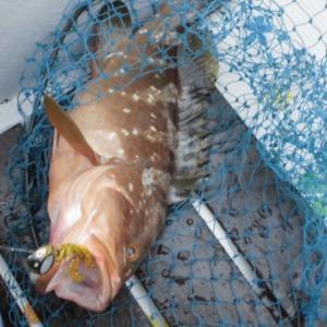 国東半島へ鯛ラバ