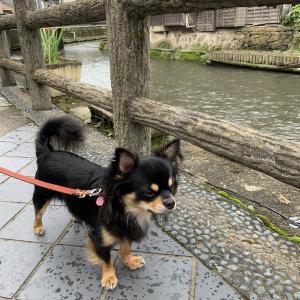 倉の街の川沿いをちょこっと散歩
