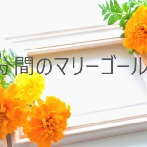 ドラマ【4分間のマリーゴールド】菜々緒さんがかわいい!!イメチェン理由は?