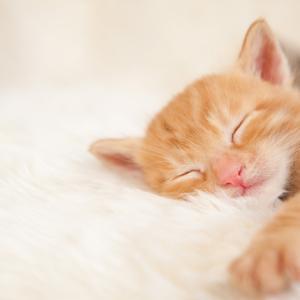 睡眠不足は美肌の大敵