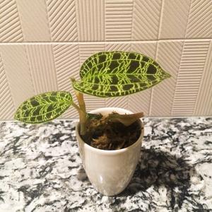 我が家の植物事情