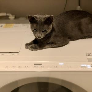 猫に洗濯機のホースをかじられた!給水ホースの交換方法
