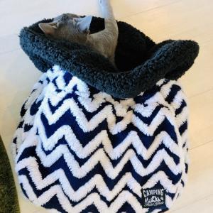 寒そうなので寝袋をプレゼント