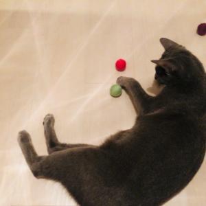 猫もお気に入り!心地良い鈴の音の羊毛フェルトボール