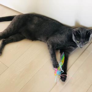 猫の狩猟本能を刺激する猫じゃらし「カシャぶんスーパーロング」