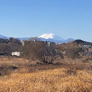 今日の多摩川からの富士山