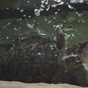 九十九島水族館「海きらら」海亀に餌やり体験 日曜限定! 水族館ミステリーツアー