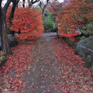 落ち葉がすてきなお庭