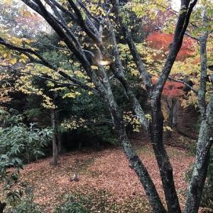 晩秋の箱根旅行