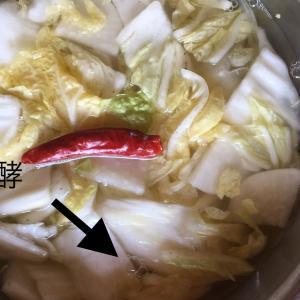 水キムチ大成功報告&水キムチ動画レッスン第3弾募集
