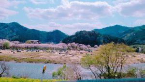 京都笠置キャンプ場!川遊びやお花見・紅葉シーズンにもおすすめで安い