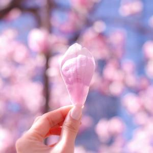愚直(笑)コロナ禍の春 お花見キャンプ!断念・・