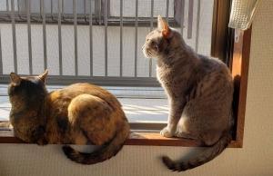 猫多頭飼育崩壊の苦い思い出
