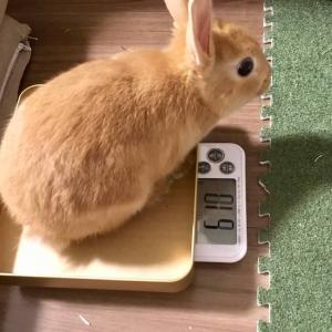 おはぎ、急ピッチで太る。