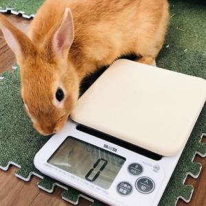 うさぎの体重管理に使う計量器の選び方まとめ。