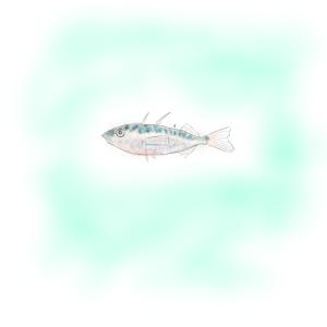 懐かしい糸魚の味(下手くそ描画シリーズ)