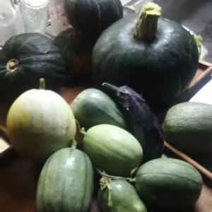 ビニールハウス最後の収穫 メロン カンロ カボチャも