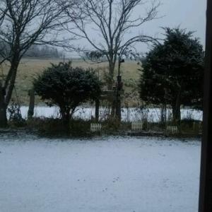 初雪だ 昨日の昼過ぎ1時間位 1センチ 今日は完全に消えた