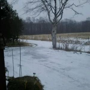 朝 8時すぎ細かい雪になった 昼過ぎまで積雪か…
