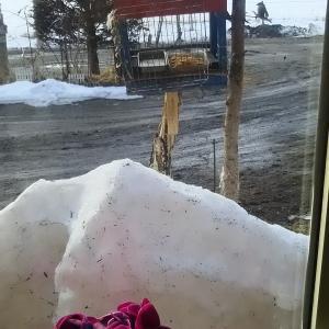 雪どけで野鳥餌台復活 赤ゲラ ガラ系 雀 大集合
