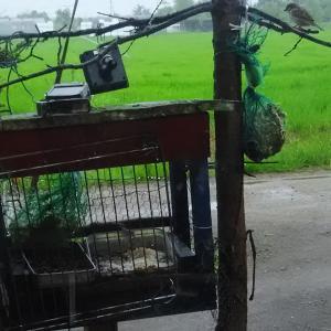 雨でもお客さん やや少ないか野鳥餌だい