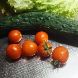 ミニトマト初収穫 思ったより甘い 9月まで採れるかな