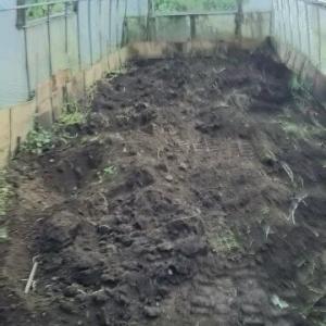 鈴なりだったミニトマトハウス 綺麗に片付けた イチゴ苗置き場だ