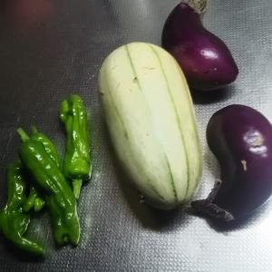 最終近い収穫 秋ナス しし唐辛子 カンロ まだメロン ミニトマト