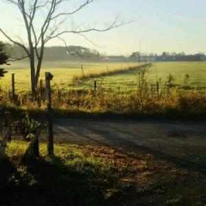 朝靄朝霧朝霜 我が家の前の借景 暫く見られない