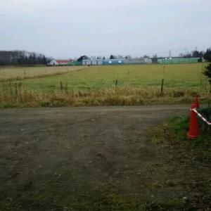 我が家の前の広い借景 牧草地だ 牛や馬が少しいる