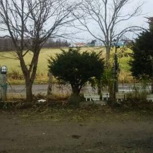 雨の熊牛 広大な我が家の借景 冬枯れの牧草地