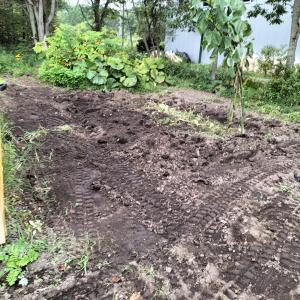 じゃがいも畑掘り起こし ユンボで2回目取り残しの芋がかなり出た
