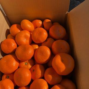 サツマイモが売れました🌈なるべく自然農園の振り返り