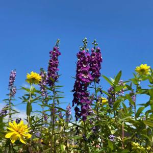 青空に花🌸を写そう