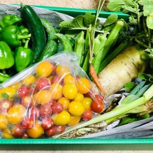 本日のなるべく自然農園🍅夕飯🍚