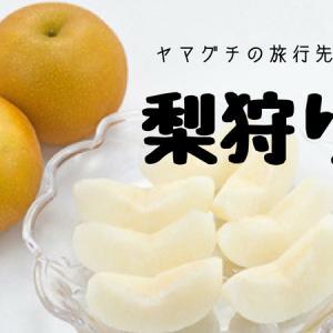 美味しい梨が食べ放題!下関産梨狩り体験ができる農園紹介!