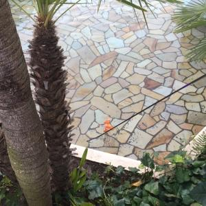 ディズニーの池に落ちたカンガルーの親子の救出劇