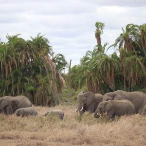 象の群れを撮ってみた