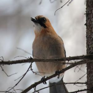 北海道で野鳥を撮ってみた