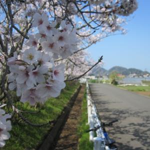 春の楽しみ、花見ポタ