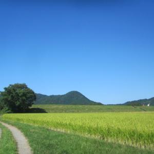 三日月湖畔に広がる田園と青い空