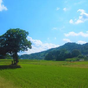彼岸花と道祖神のある風景