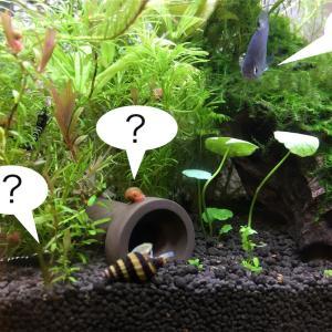 水草水槽の掃除屋キラースネールで増えすぎた貝を撃退しよう!