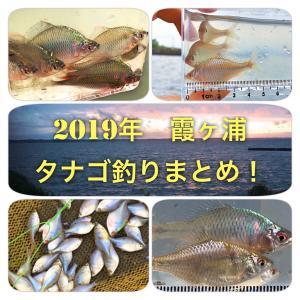 2019年 霞ヶ浦 タナゴ釣りまとめ!カネヒラ・バラ・稚魚情報も!