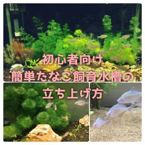 初心者向け簡単タナゴ飼育水槽の立ち上げ方