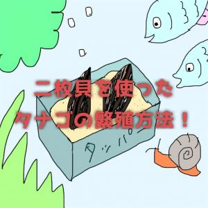 二枚貝を使ったタナゴの繁殖方法!タッパーを使って貝を飼育!