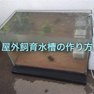 屋外タナゴ飼育水槽!夏場冬場の温度変化にも強い水槽の作り方!