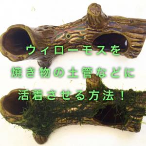 ウィローモスを土管や焼き物へ活着させる方法を紹介!
