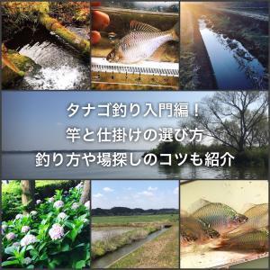 タナゴ釣り入門編!竿と仕掛けの選び方・釣り方や場探しのコツも紹介