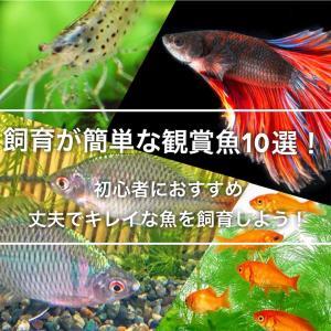 飼育が簡単な観賞魚10選!初心者におすすめ丈夫でキレイな魚を飼おう